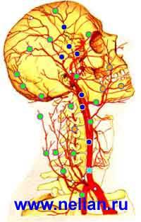 Тестирование артерий головы и шеи - определение функционального состояния